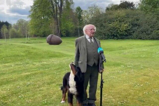 Щенок бернского зенненхунда захотел выступить перед журналистами. Ему помешал президент Ирландии