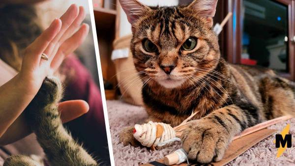 Бездомный кот пугал людей сердитой мордой, пока не обрёл хозяйку. Капля домашнего уюта — и котана не узнать