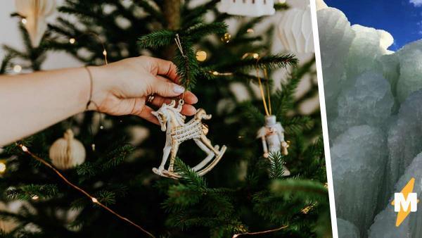 Семья не покупает новогодние ёлки, а выращивает зимние деревья. Они изо льда, и такие не сделает даже Эльза