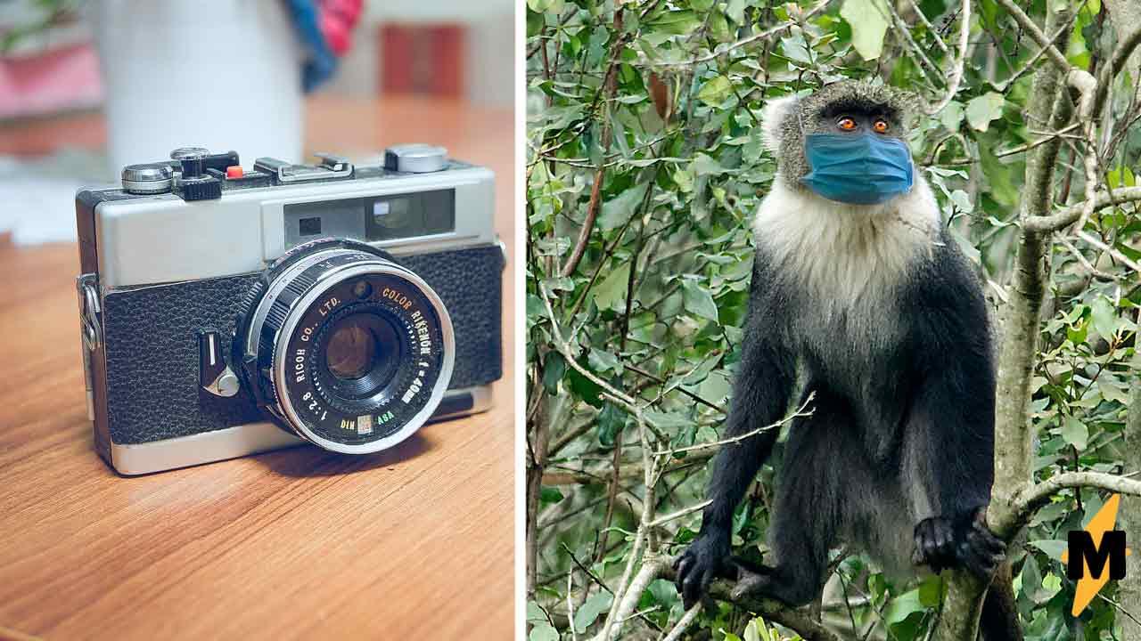 В Кении обезьяна надела защитную маску, и люди восхищались её умом. Пока не поняли, что видят на самом деле