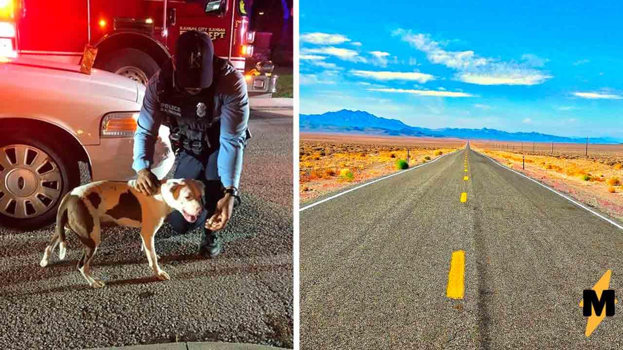 Хозяин пошёл гулять с псом и был рад, когда тот от него убежал. Так питомец спас своему человеку жизнь
