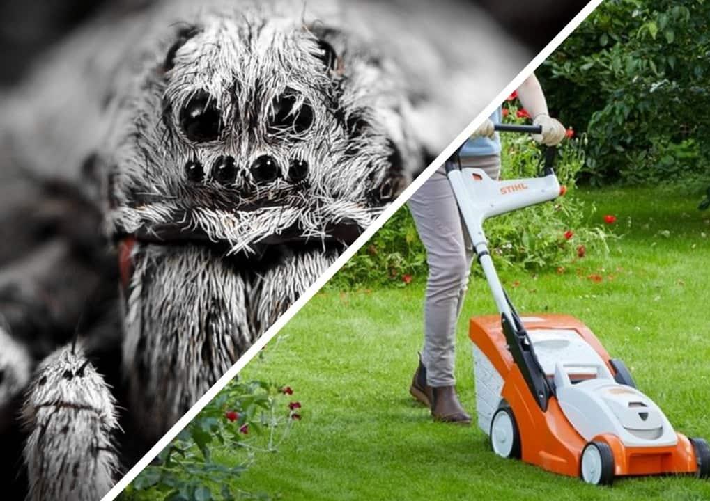 Студентка увидела на лужайке насекомое и не зря испугалась. Перед ней был настоящий трансформер из пауков