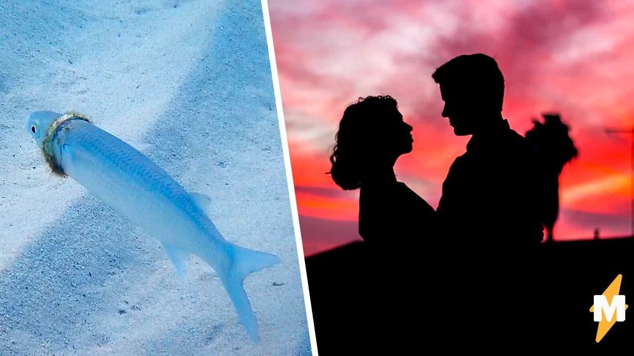 Муж случайно сделал предложение руки и сердца рыбе, и та приняла его. Как объяснять это жене — другой вопрос