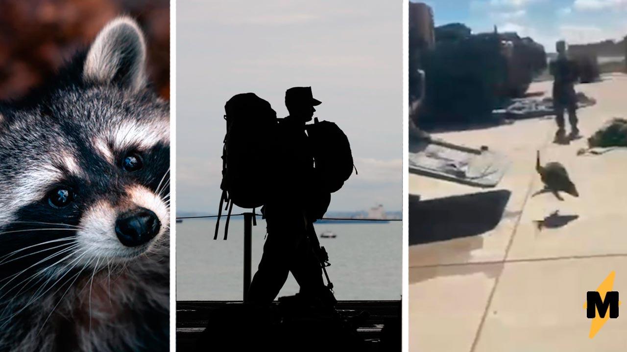 Что нужно, чтобы обезвредить хорошо подготовленных десантников из США? Один енот-камикадзе, не знающий жалости