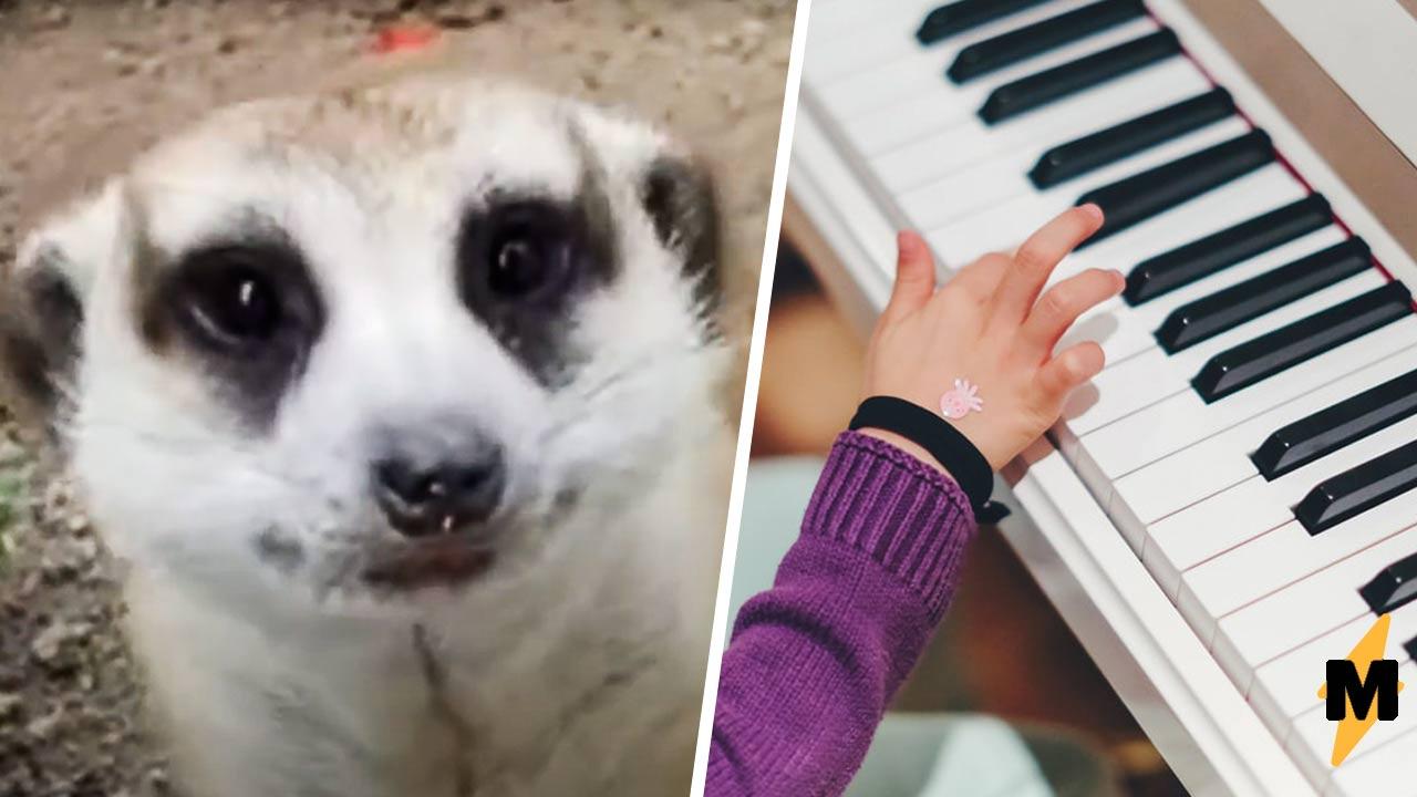Одиннадцатилетка даёт концерты животным в зоопарке. Чтобы это сделать, ей пришлось самой озвереть — буквально