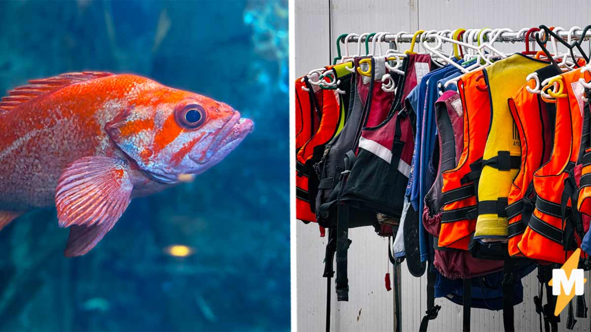 Золотая рыбка не умела плавать, но хозяева не сдались. Теперь вы знаете, как выглядит спасательный жилет у рыб