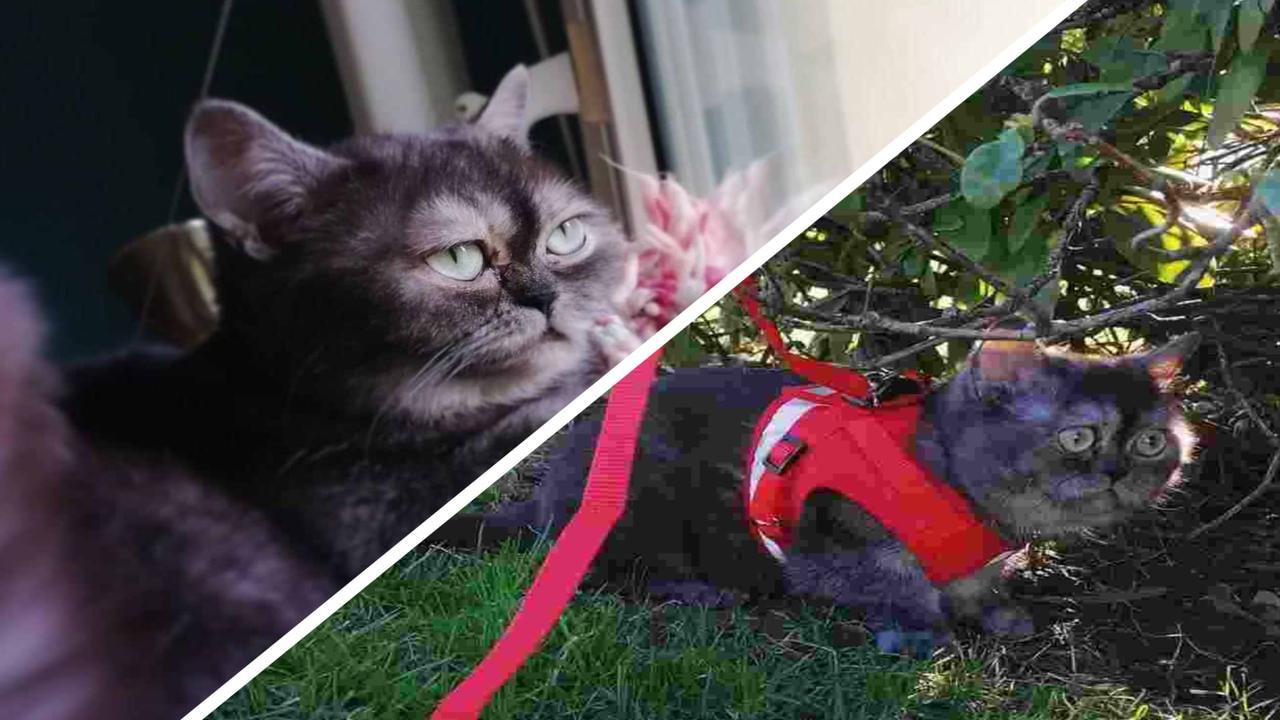Кошку никто не хотел брать из приюта из-за её мордочки. Новая хозяйка нашла причину – это копия Grumpy Cat