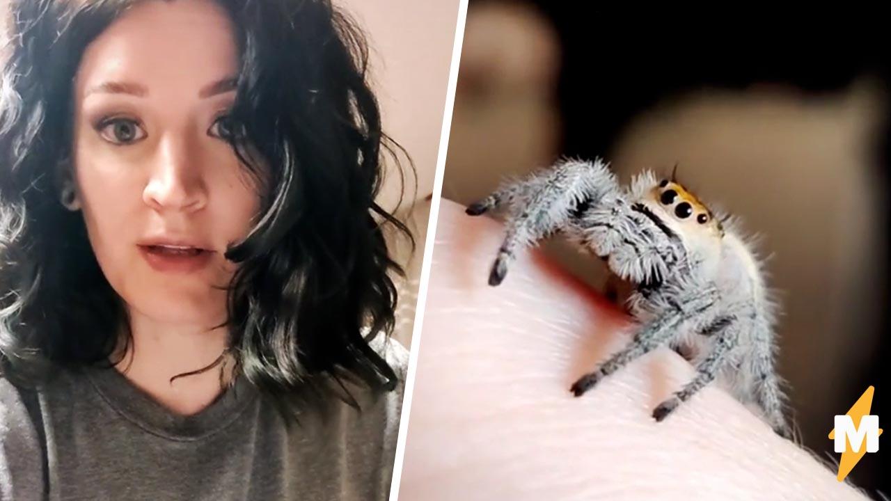 Владелица паука показала, что с питомцем сделала старость. И арахнофобы (теперь уже бывшие) достали платочки