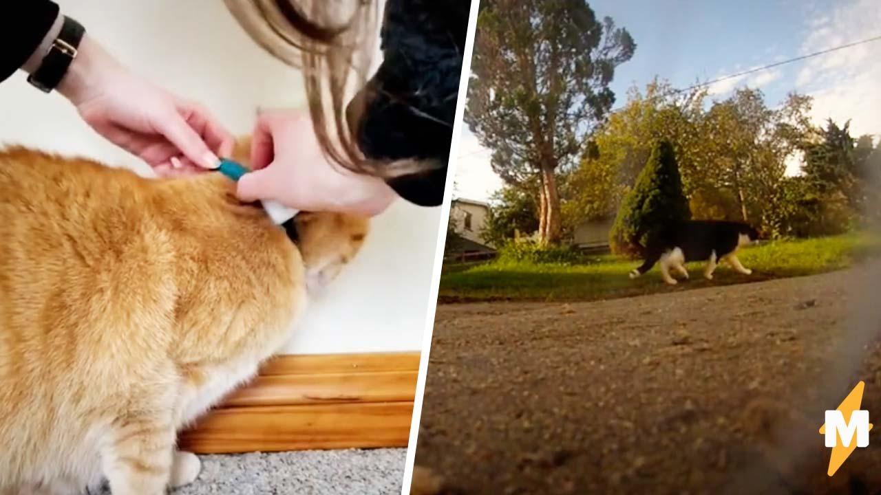 Кот гонял с GoPro на шее и выдал секреты пушистых. Вот только после видео люди завидуют барсикам