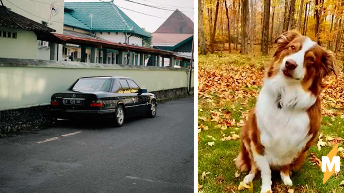 В США собака врезалась в музей. За небрежное вождение ей грозит лишение водительских прав