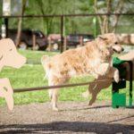 Зоны для выгула собак появятся в Железноводске