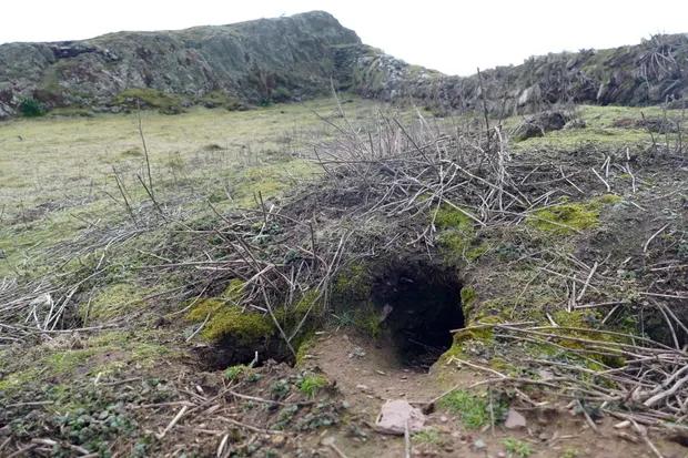 Валлийские кролики откопали артефакты времен мезолита и бронзового века