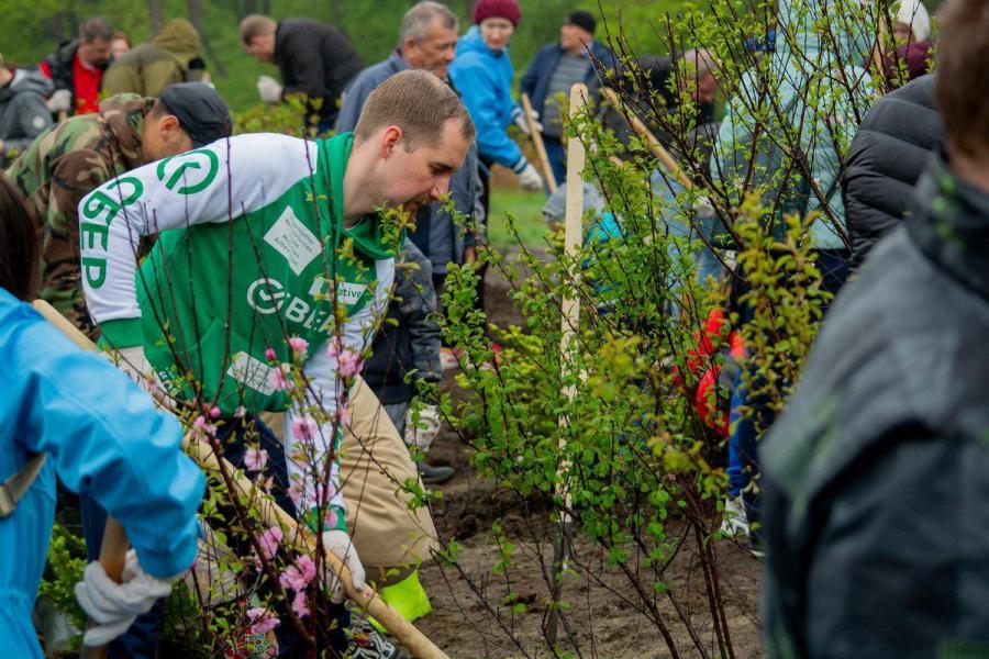 Более тысячи деревьев высадили во Владивостоке клиенты Сбербанка
