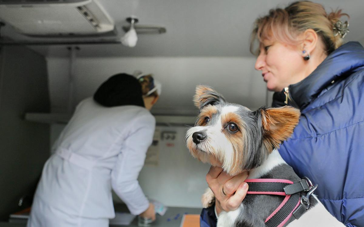 Ветеринары сообщили о рисках отказа вакцинировать домашних котов и собак