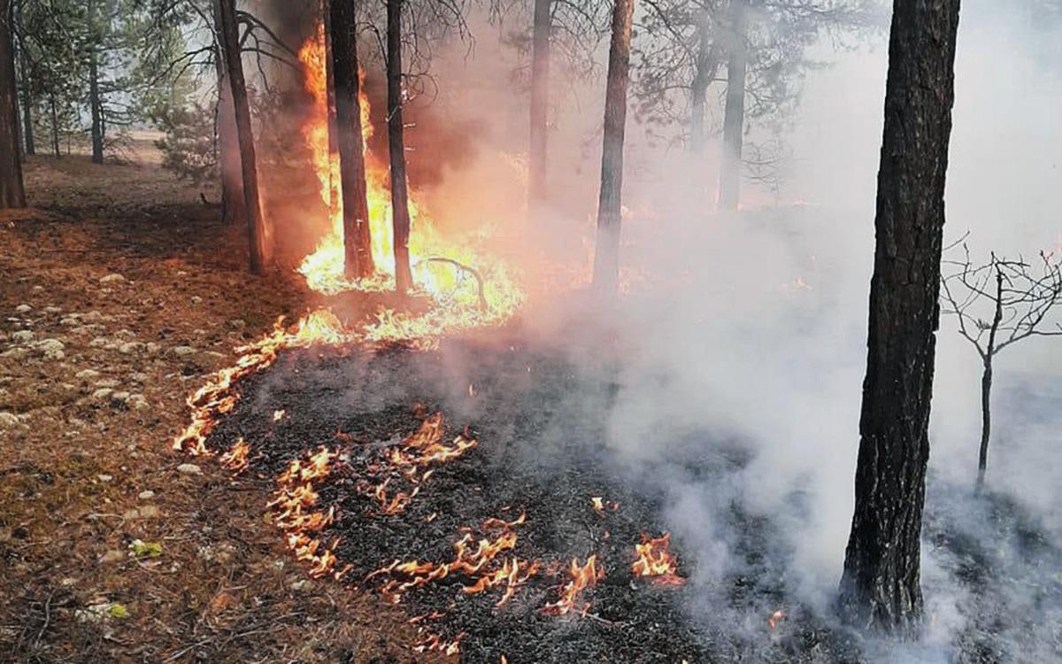 МЧС отчиталось о ситуации с природными пожарами в Якутии