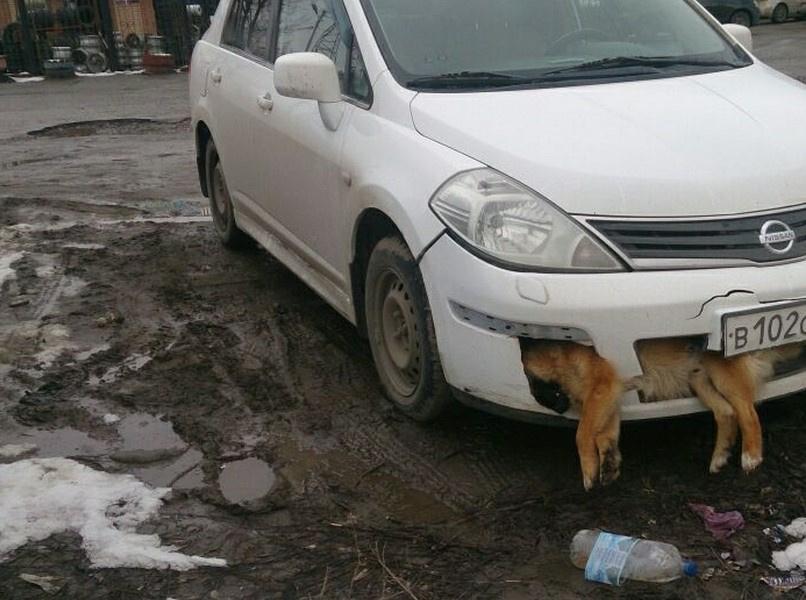 Собачьи органы опеки. В Госдуму внесен проект закона о числе животных в квартирах