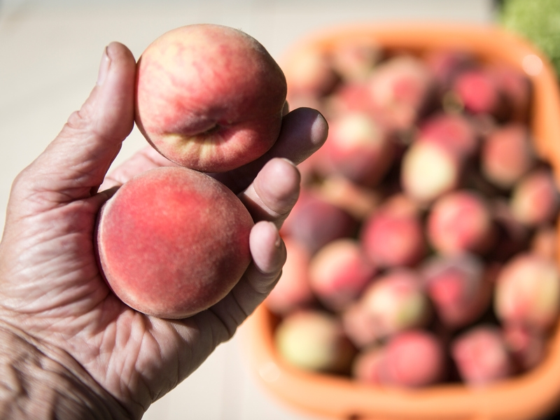Мясников назвал абрикос и персик смертельно опасными продуктами для детей
