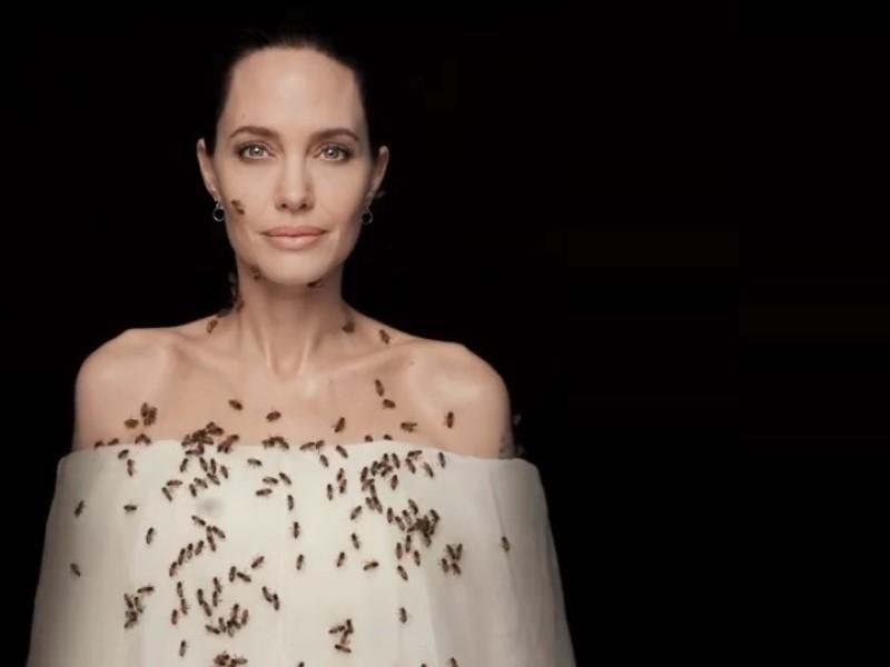 Анджелина Джоли стала лицом кампании 'Женщины за пчёл'