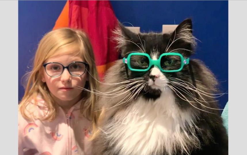 Трюфель помогает детям принять себя: как работает кошка-офтальмолог