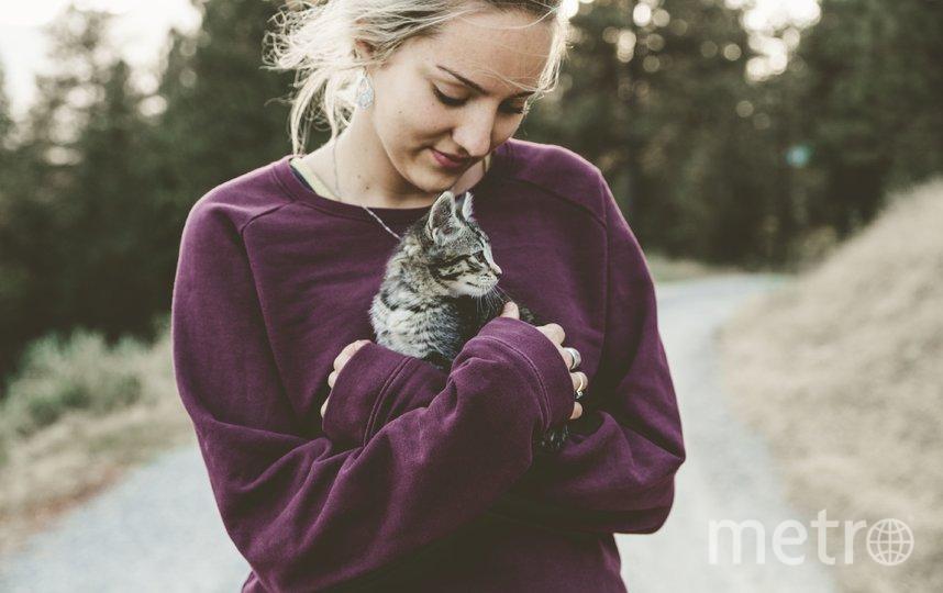 Почему одинокие люди заводят котов выяснила Мамба
