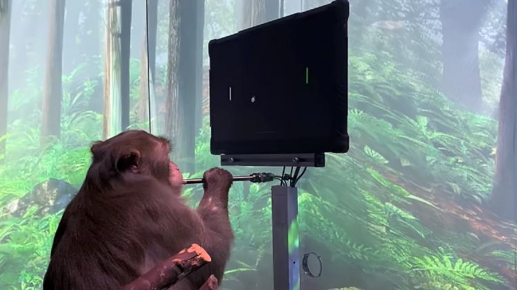 Компания Илона Маска NeuraLink опубликовала видео с обезьяной, играющей в компьютерную игру силой мысли