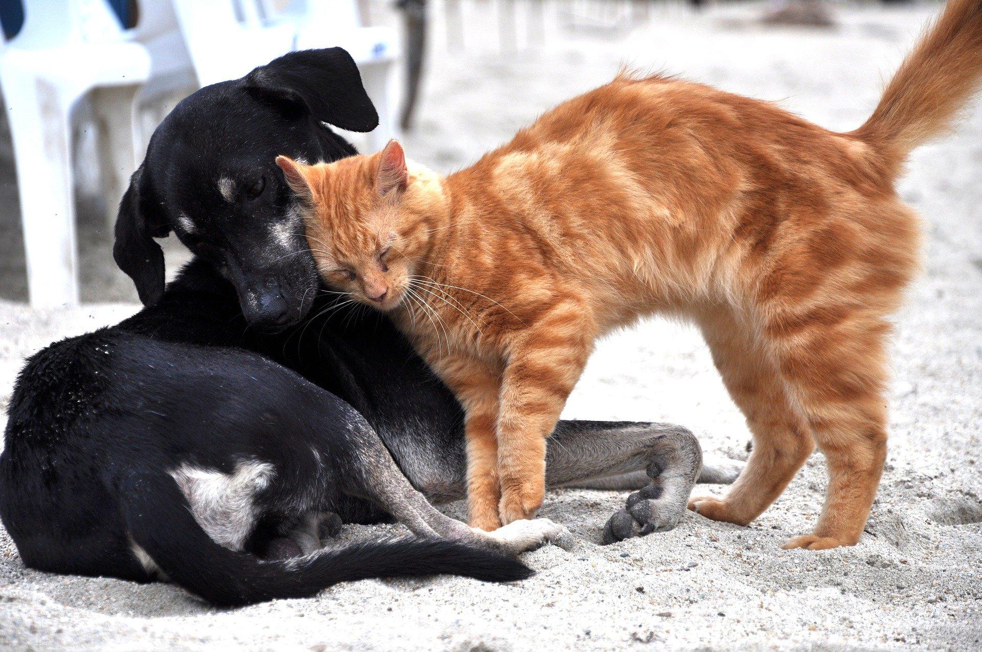 Ветеринарные врачи разъяснили различия коронавируса у человека и домашних животных
