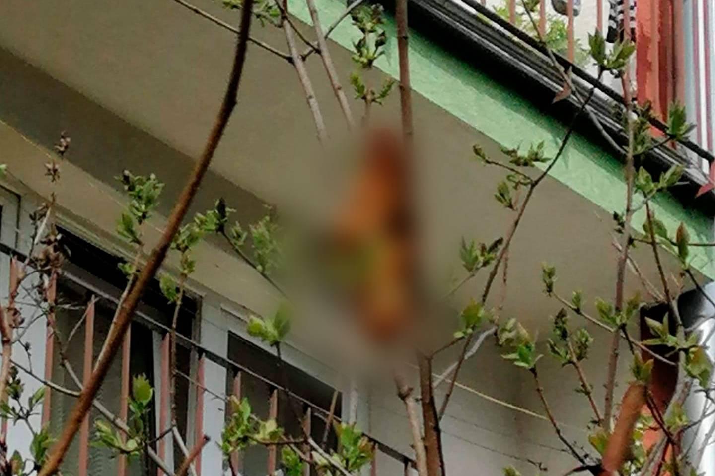 Целый дом жил в страхе из-за жуткого зверя на дереве, увидев которого инспекторы рассмеялись до слёз