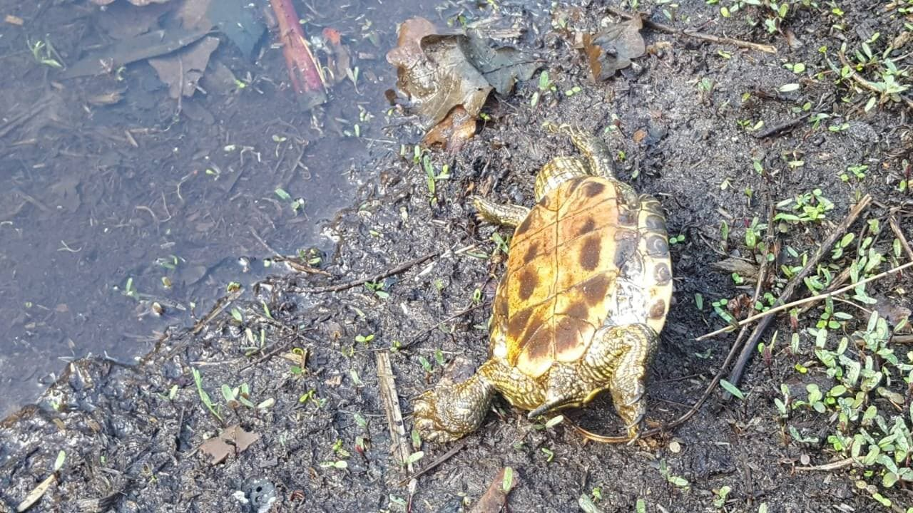 'Животных много, явно мёртвые': В озере под Воронежем погибли несколько десятков черепах — видео