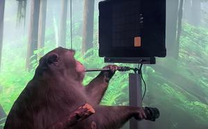'Готов сыграть один на один': Украинский геймер бросил вызов чипированной обезьяне Маска