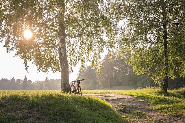 'Летняя погода': Аномальное тепло придёт в Центральную Россию и отправится в Сибирь