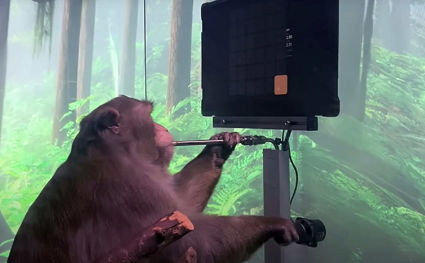 Компания Илона Маска показала ролик с играющей в видеоигры чипированной обезьяной