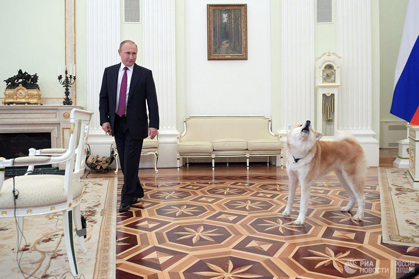 Путин подписал пакет документов об ответственном обращении с животными